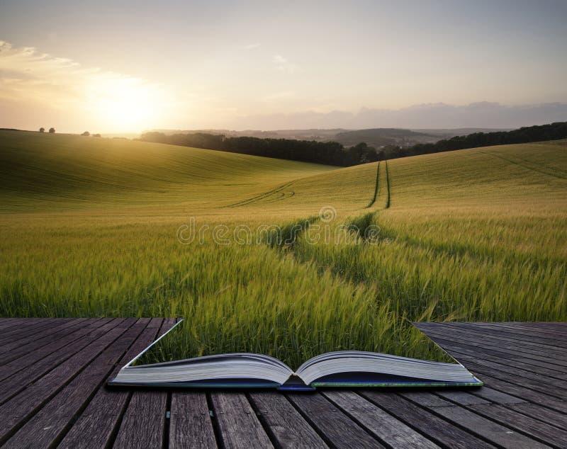 Creatieve conceptenpagina's van het landschapsbeeld van de boekzomer van tarwe F stock foto