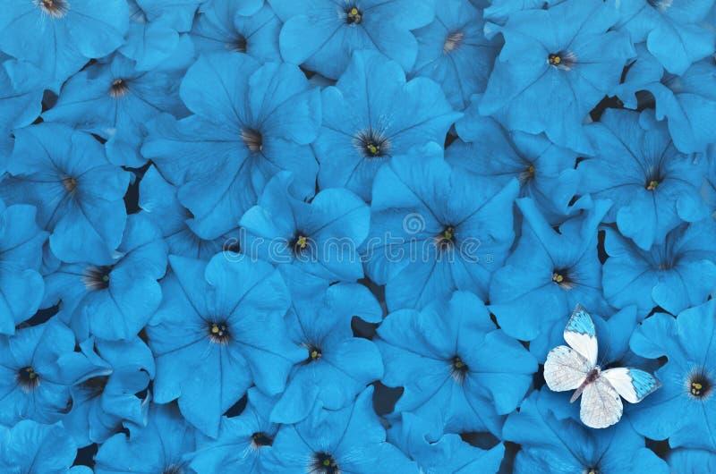 Creatieve die lay-out van bloemen met witte vlinder wordt gemaakt Het concept van de aard stock foto's