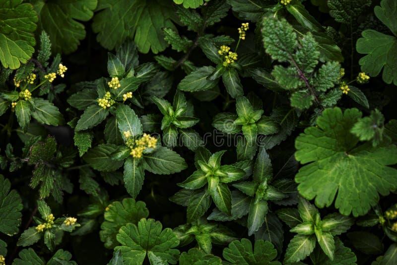 Creatieve die lay-out van groene bladeren wordt gemaakt stock afbeelding