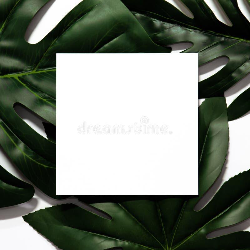 Creatieve die lay-out van tropische bladeren wordt gemaakt stock foto's