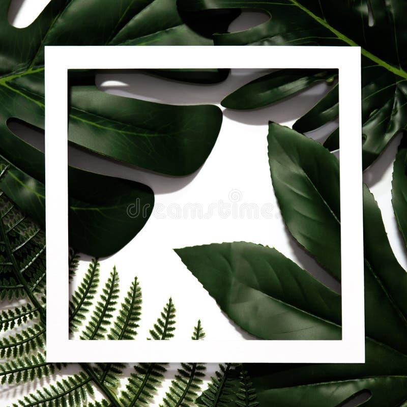 Creatieve die lay-out van tropische bladeren wordt gemaakt royalty-vrije stock foto's