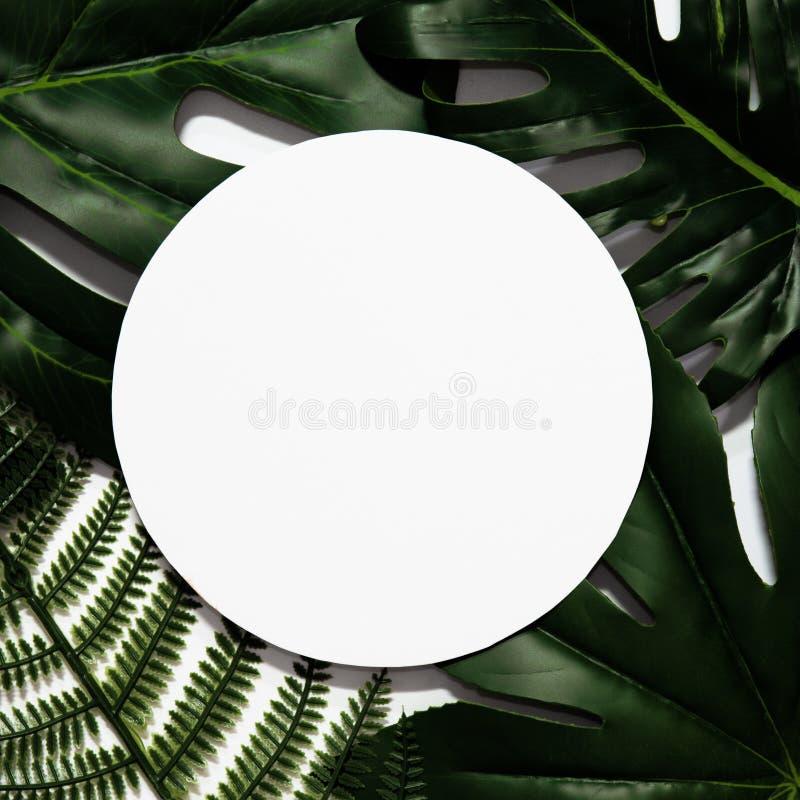 Creatieve die lay-out van tropische bladeren wordt gemaakt stock foto