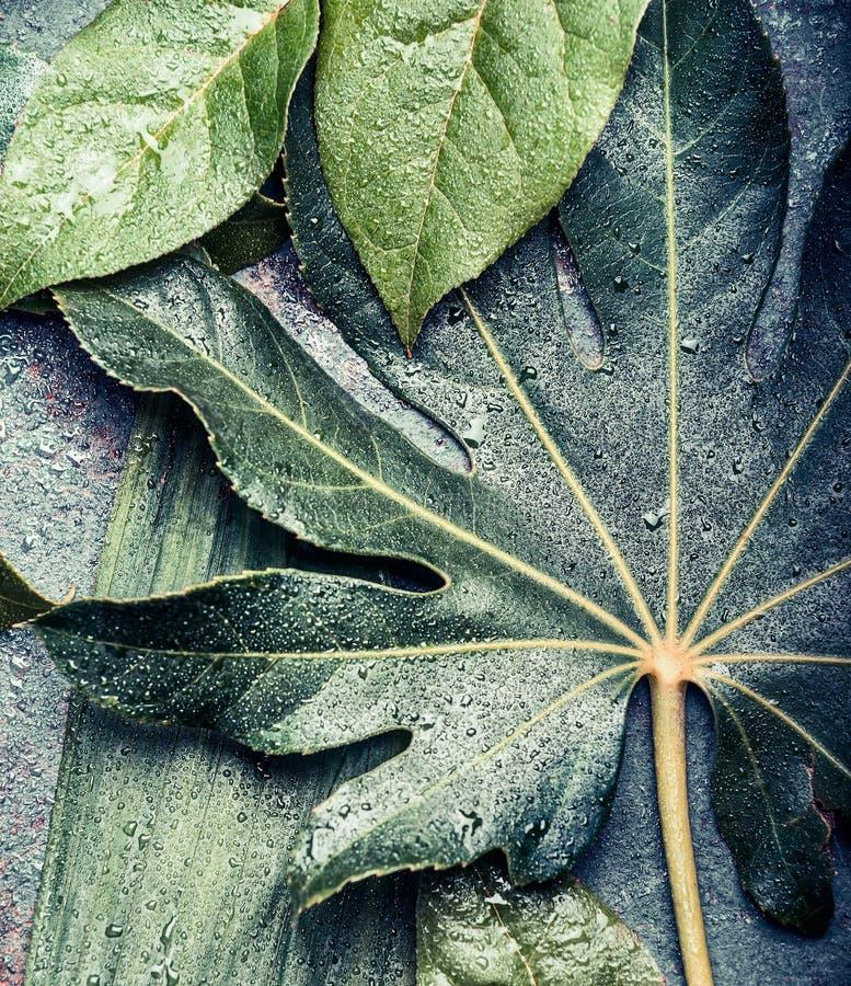 Creatieve die lay-out van tropische en palm en wildernisbladeren wordt gemaakt, hoogste mening stock fotografie