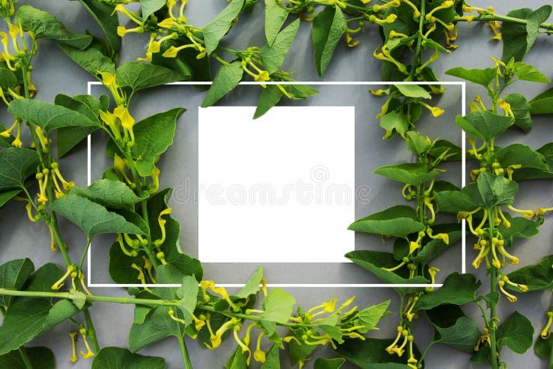 Creatieve die lay-out van wilde bloemen en bladeren met document kaartnota wordt gemaakt Vlak leg Het concept van de aard royalty-vrije stock afbeeldingen