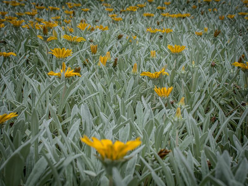 Creatieve foto van een gele bloemenweide stock foto's