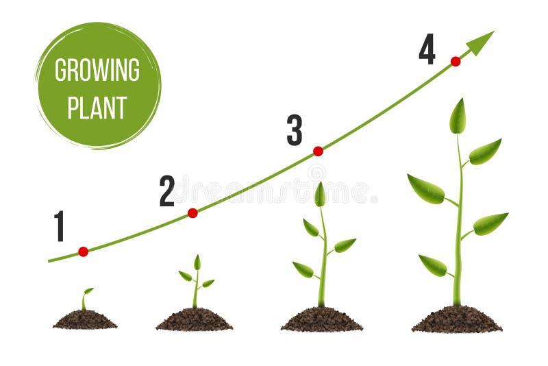 Creatieve illustratie van de groei omhoog groene die boom met blad op achtergrond wordt geïsoleerd De ontwikkeling van het conjun vector illustratie