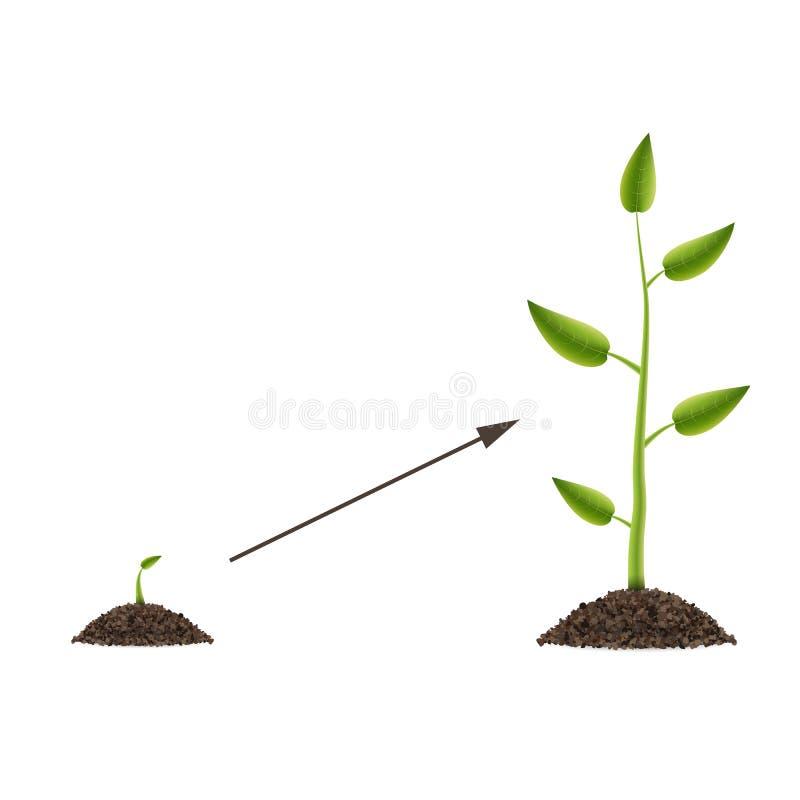 Creatieve illustratie van de groei omhoog groene die boom met blad op achtergrond wordt geïsoleerd De ontwikkeling van het conjun stock illustratie