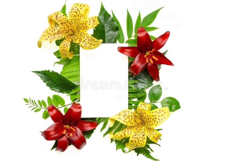 Creatieve lay-out met rode en gele bloemen, bladeren en lege witte die groetkaart op witte achtergrond worden geïsoleerd royalty-vrije stock foto's