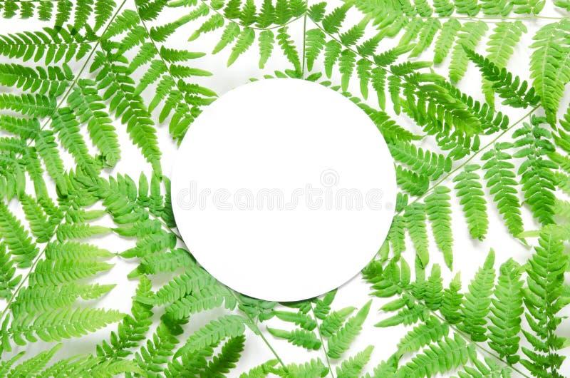 Creatieve lay-out van groene tropische varenbladeren met ruimte voor tekst op Witboek Model Mening van hierboven royalty-vrije stock foto
