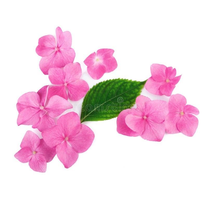 Creatieve regeling van roze bloemen op witte achtergrond Vlak leg royalty-vrije stock afbeelding