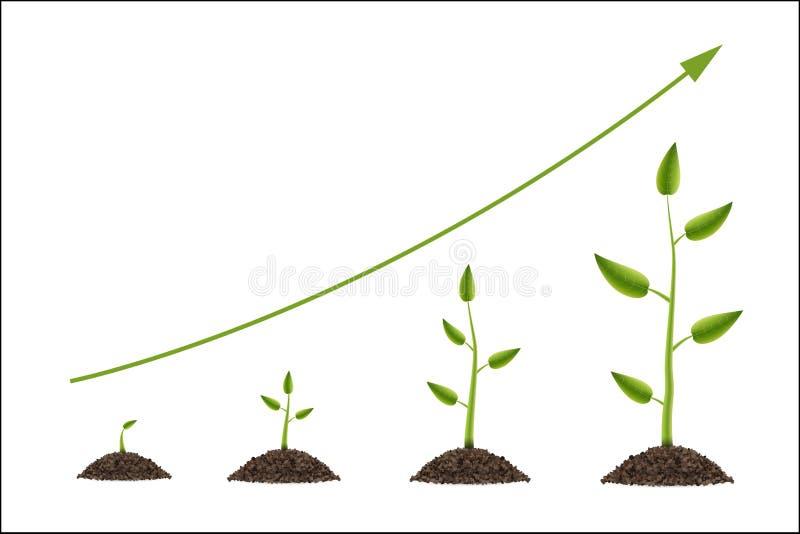 Creatieve vectorillustratie van de groei omhoog groene die boom met blad op achtergrond wordt geïsoleerd De ontwikkeling van het  stock illustratie