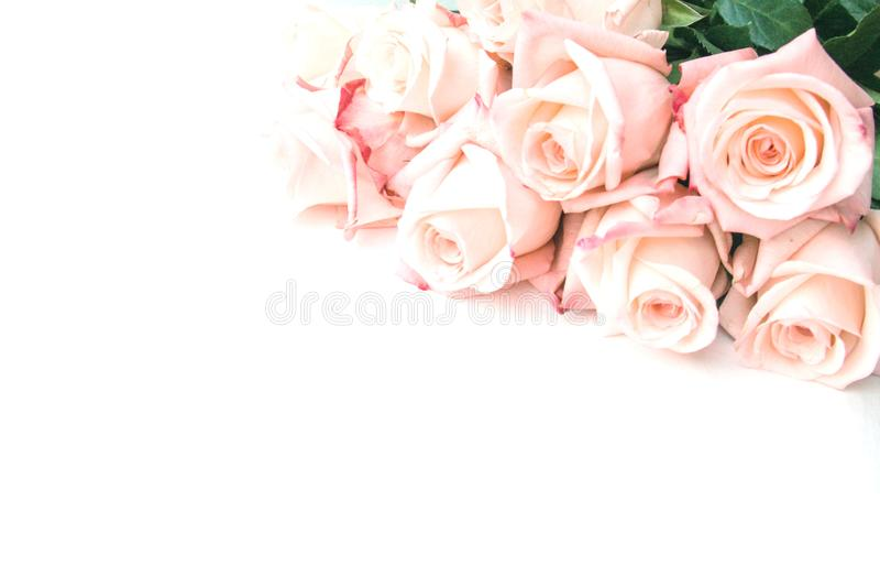 Creatieve verse mooi nam liggend op document achtergrond met exemplaarruimte voor tekst toe Duotone Front View, sluit omhoog royalty-vrije stock fotografie