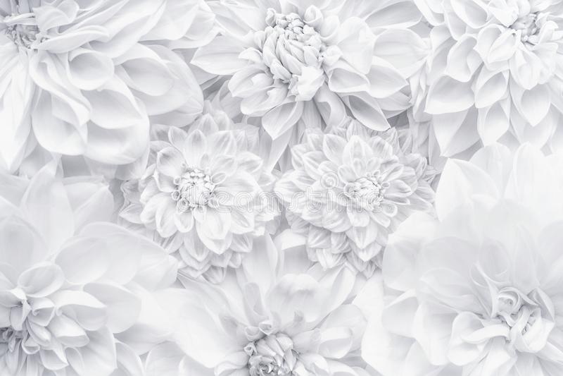 Creatieve witte bloemenlay-out, bloemenpatroon of achtergrond voor groetkaart van Moedersdag, verjaardag, de Dag van Valentine `