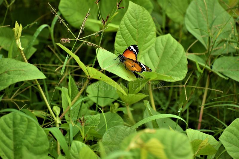Butterfly. Creation of god with divine touch stock photography