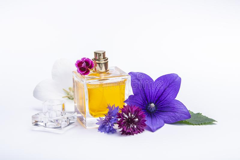Creation of perfume essence, summer flowers sweet light fragrance, perfume bottle and colorful aromatic flowers isolated stock image