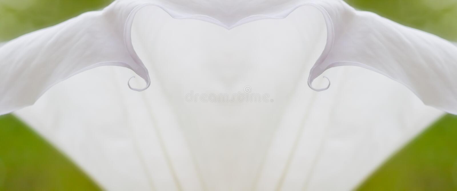 Abstract White Moon Flower on Green Background stock photography