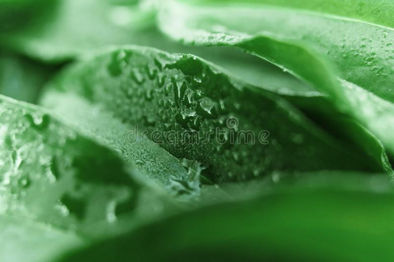 Creative background, a layout of green leaves. Flat lay. Spring summer, border pattern. Air artistic image, free space. The nature royalty free stock photos
