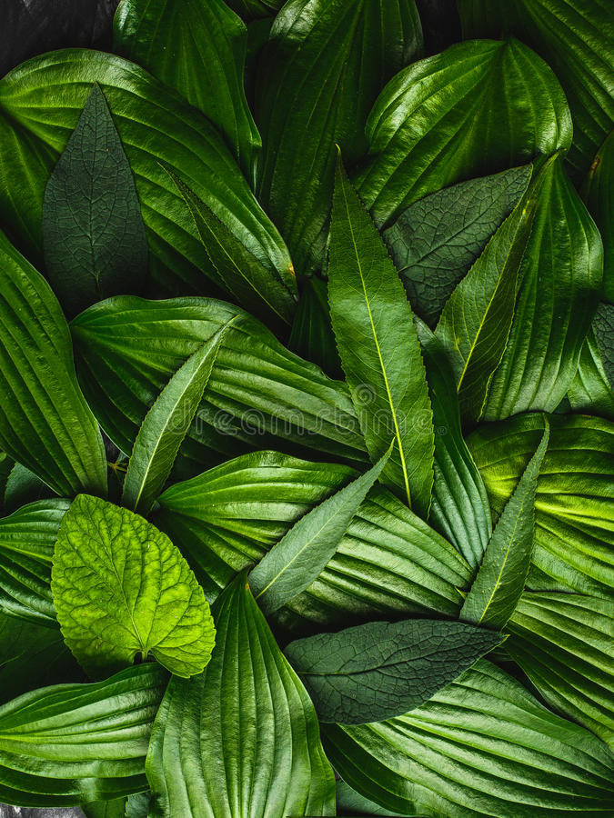 Creative background made green leaves stock photos