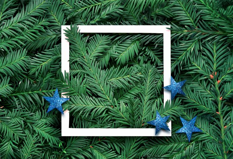 Creative background of pine branch with white paper frame. New Year and Merry Christmas Concept. royalty free stock image