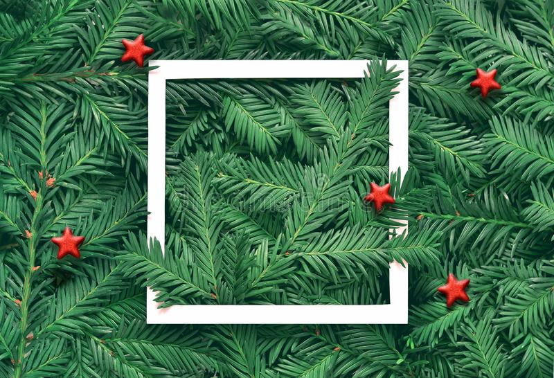 Creative background of pine branch with white paper frame. New Year and Merry Christmas Concept. stock photos