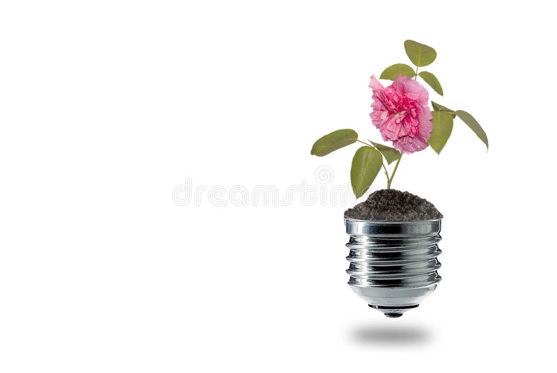 Creative clean green energy for flowers royalty free stock photos