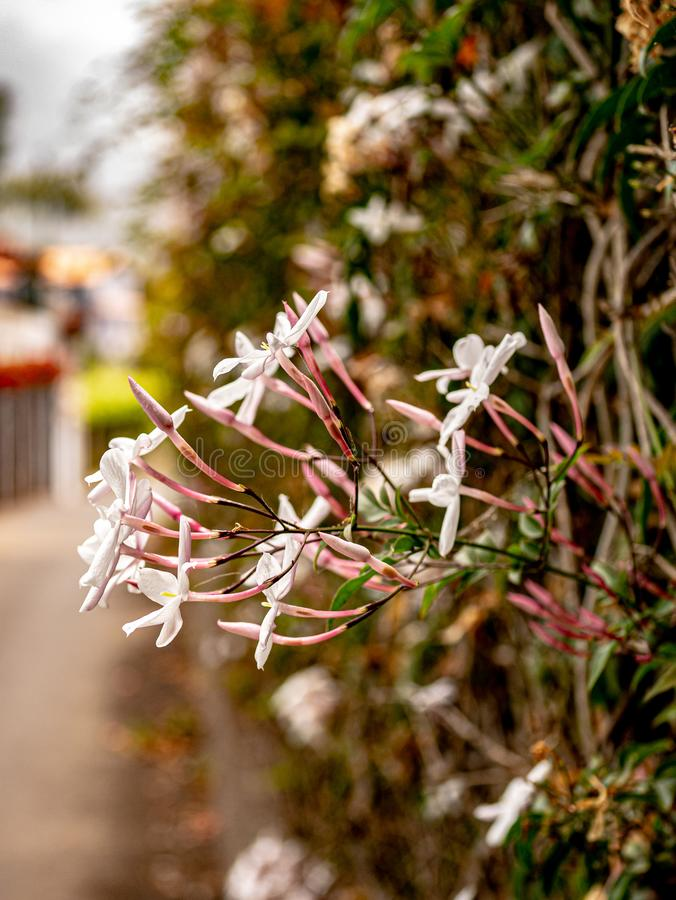 Creative close up of a flowering flower hedge. A Creative close up of a flowering flower hedge stock photos