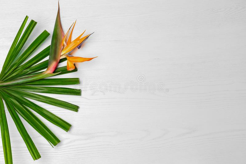 Creative composition with bird of paradise flower. And tropical leaf on white background stock photo