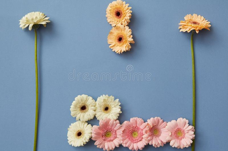 Creative composition from different gerberas isolated on a blue paper background, royalty free stock photo