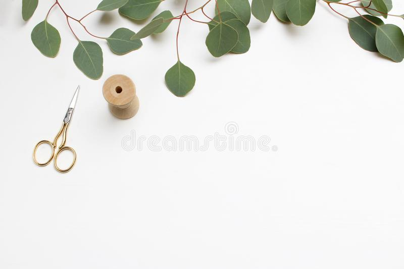 Creative composition made of green Silver dollar Eucalyptus cinerea leaves and branches, golden scissors and wooden stock photo