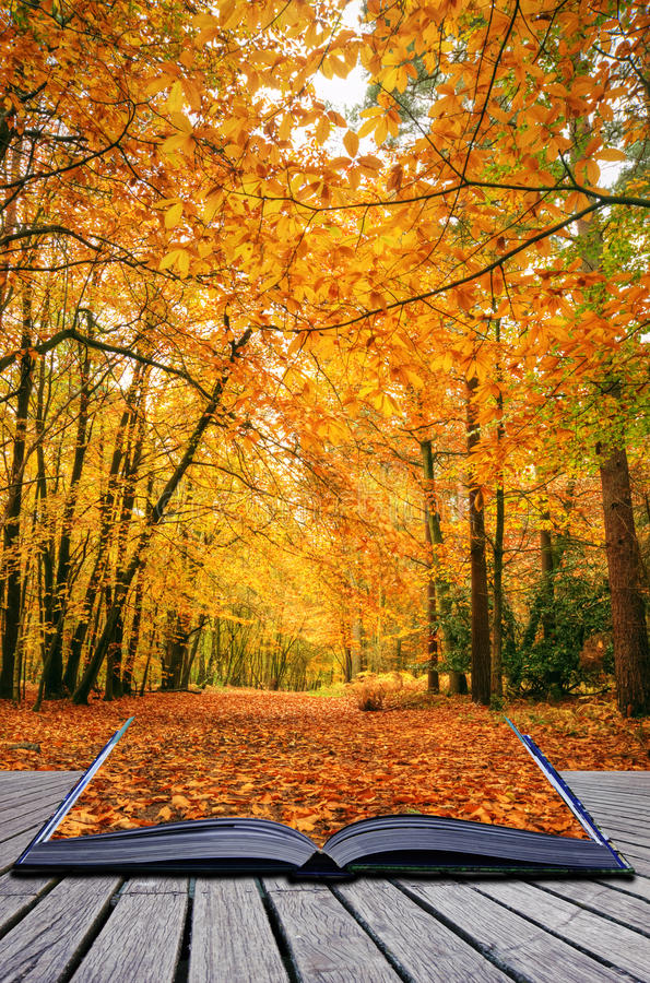 Download Creative Concept Idea Of Autumn Fall Forest Stock Image - Image: 20500131