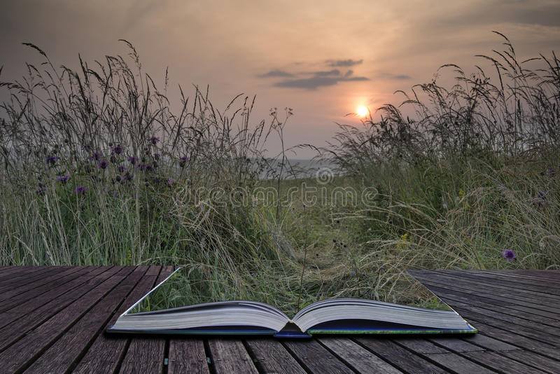 Creative concept pages of book Sunrise landscape in Summer looking through wild thistles and grass royalty free stock photo