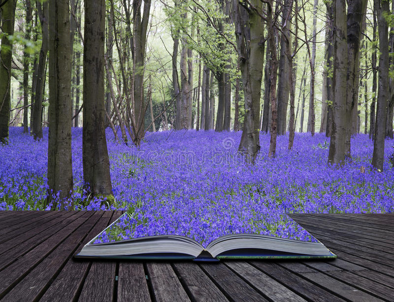 Creative concept pages of book Vibrant bluebell carpet Spring forest landscape royalty free stock photo
