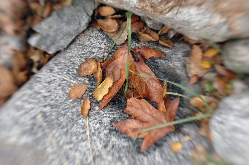 Central California Fallen Leaves Lensbaby Photo stock photos