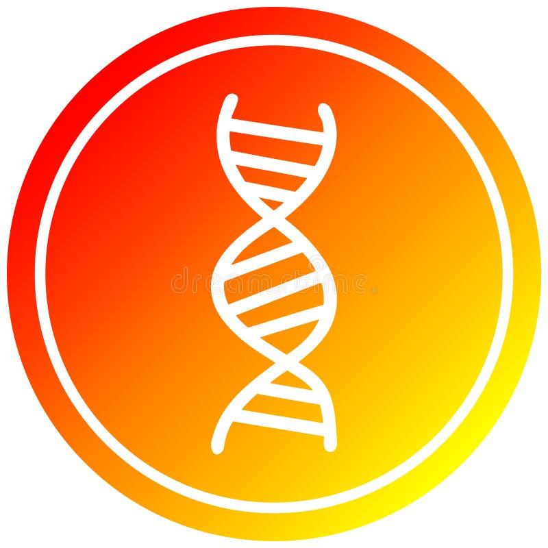 A creative DNA chain circular in hot gradient spectrum. An original creative DNA chain circular in hot gradient spectrum royalty free illustration