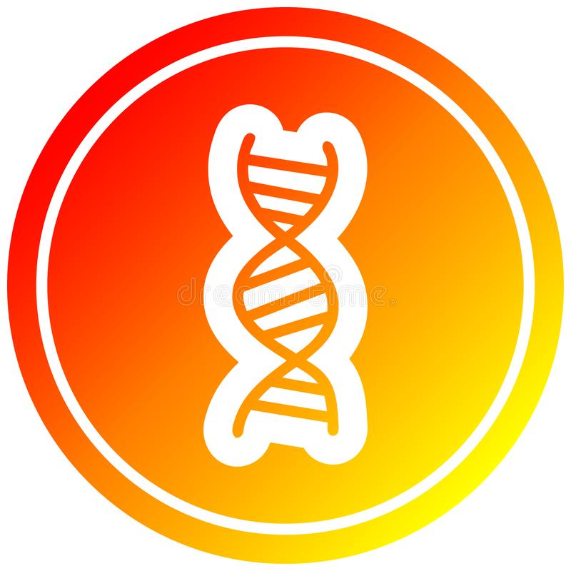 A creative DNA chain circular in hot gradient spectrum. An original creative DNA chain circular in hot gradient spectrum stock illustration