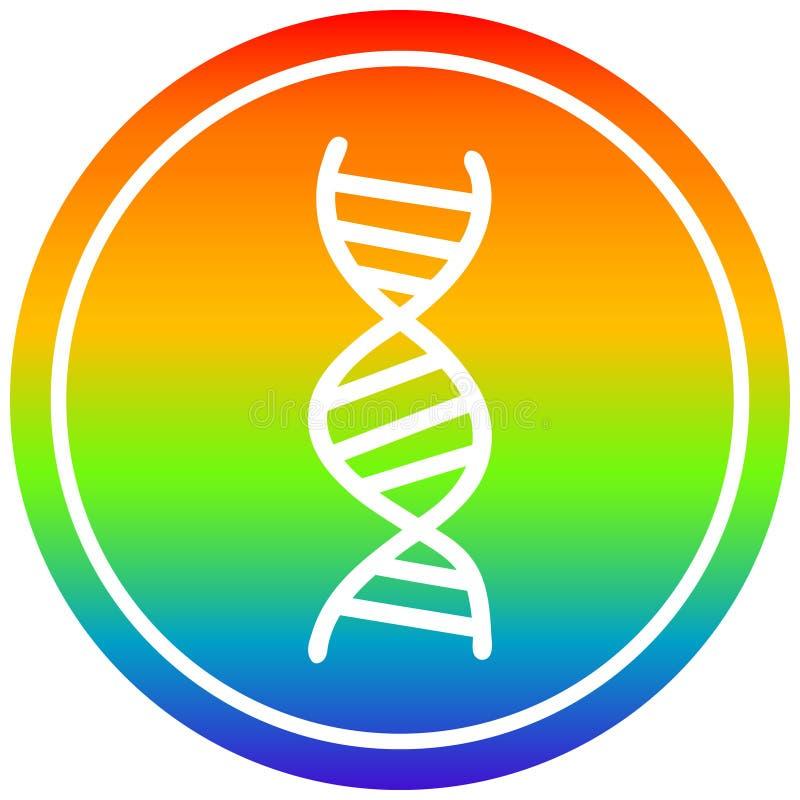 A creative DNA chain circular in rainbow spectrum. An original creative DNA chain circular in rainbow spectrum royalty free illustration
