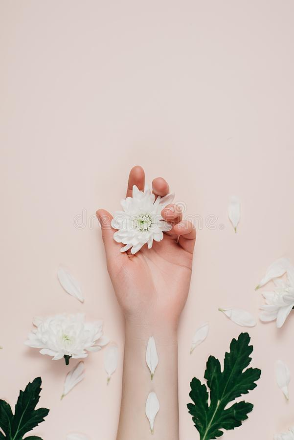 Creative and fashion art skin care of hands and white flowers in hand of women. Female hand with white flowers on pink background. Cosmetics for hands anti royalty free stock photos