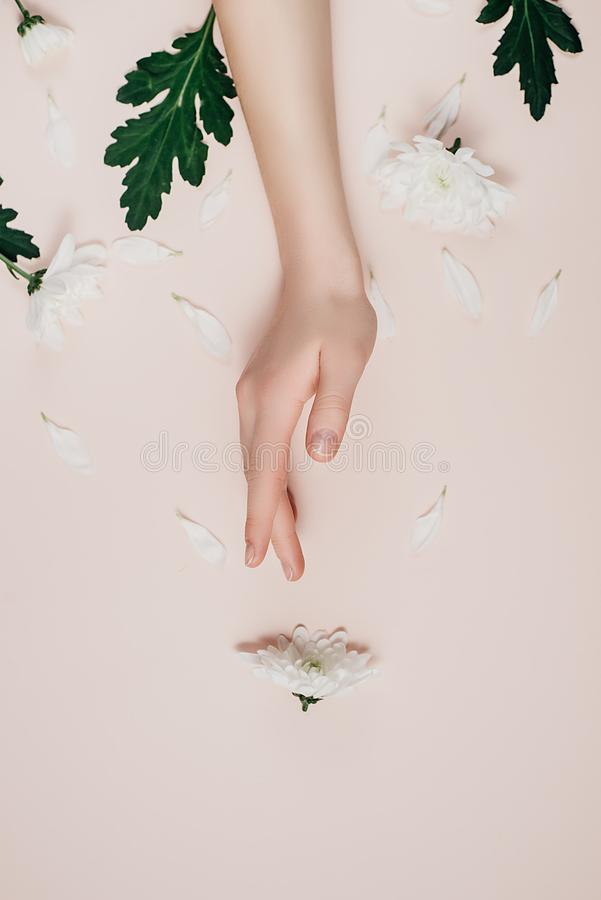 Creative and fashion art skin care of hands and white flowers in hand of women. Female hand with white flowers on pink background. Cosmetics for hands anti stock images