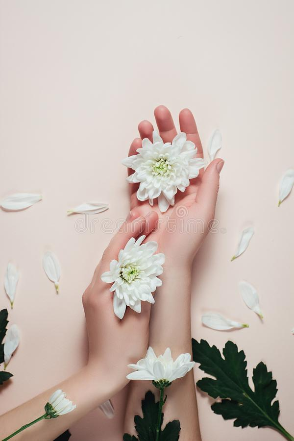 Creative and fashion art skin care of hands and white flowers in hands of women. Female hand with white flowers on pink background. Cosmetics for hands anti royalty free stock image