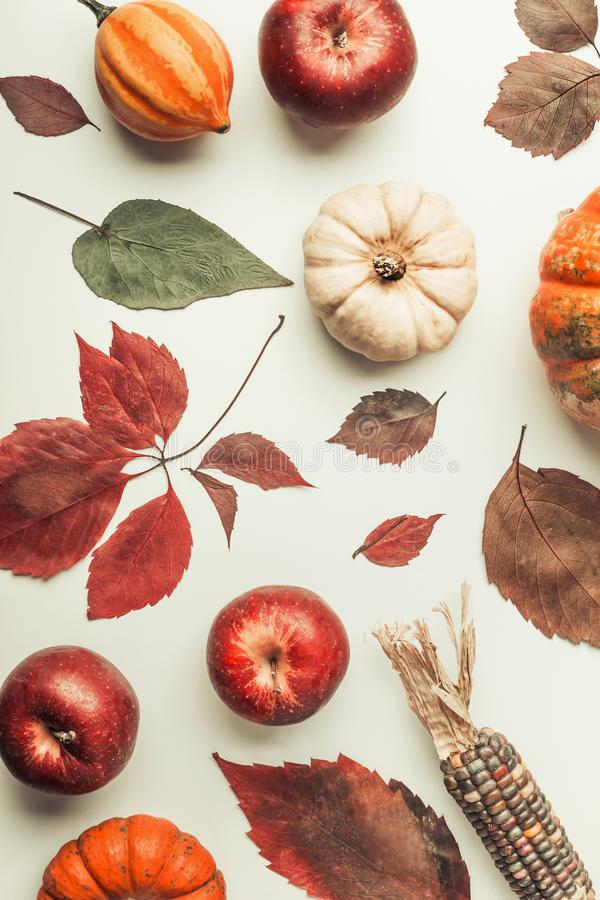 Creative Flat lay of various colorful little pumpkin, apples and fall leaves on white table background, top view. Autumn composin. G or pattern background , flat royalty free stock photo