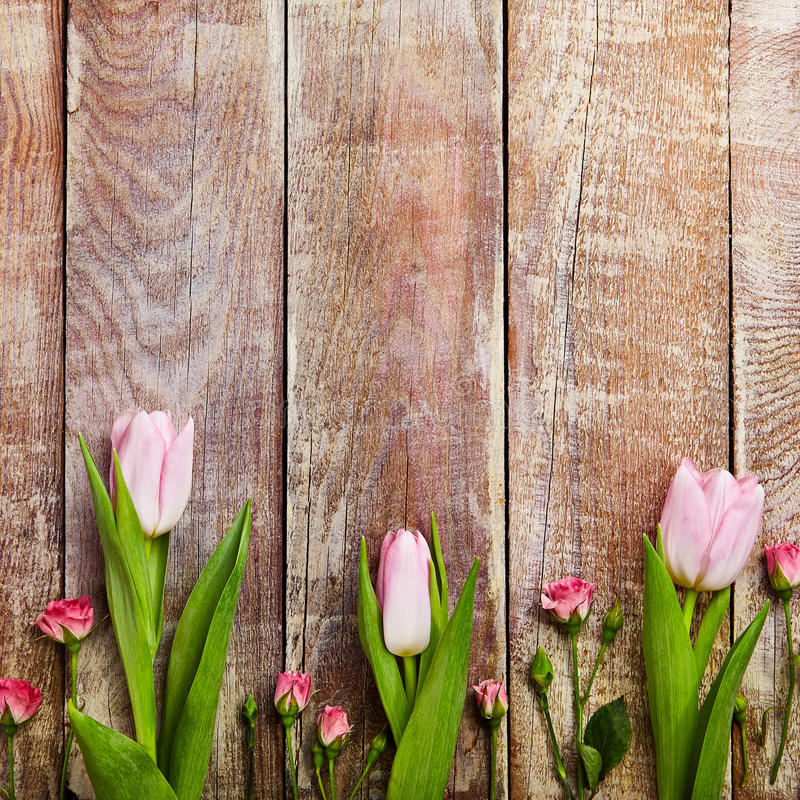 Creative Flower Background. Creative Layout of Tulip and Red Rose on Wooden Board Background. Top View. Flat Lay stock photography