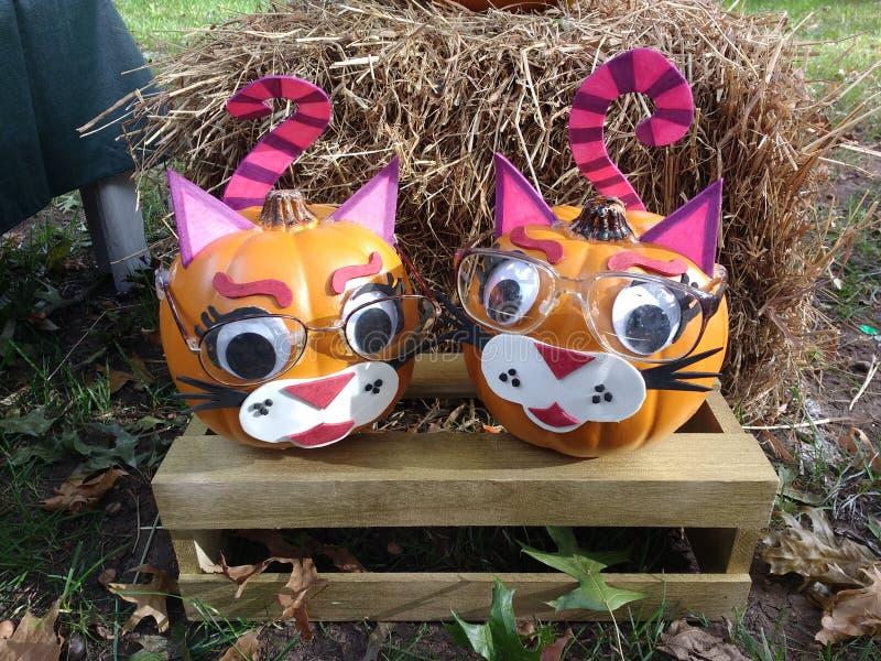 Creative Halloween Pumpkin Decorating Idea, Cat Faces, Cute Autumn, Fall Decor stock images