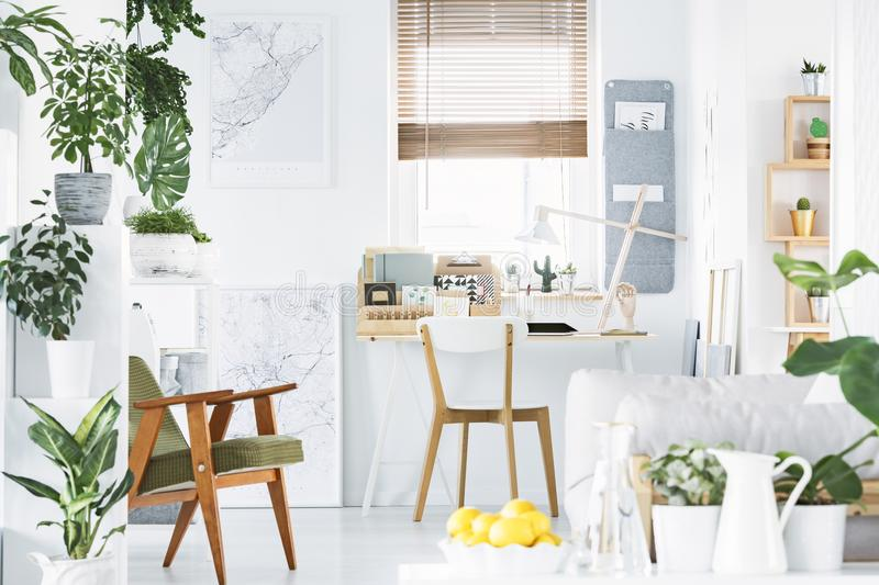 Creative home office interior with a retro armchair, desk, window, plants and bowl of yellow fruit royalty free stock photography