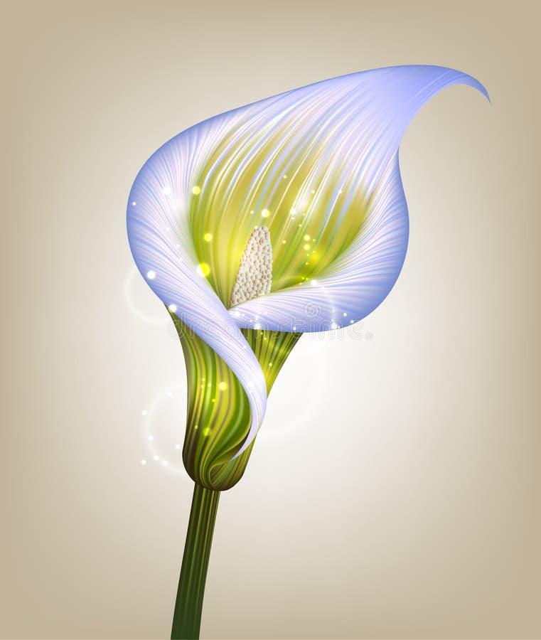 Creative illustration of purple calla lily flower vector illustration