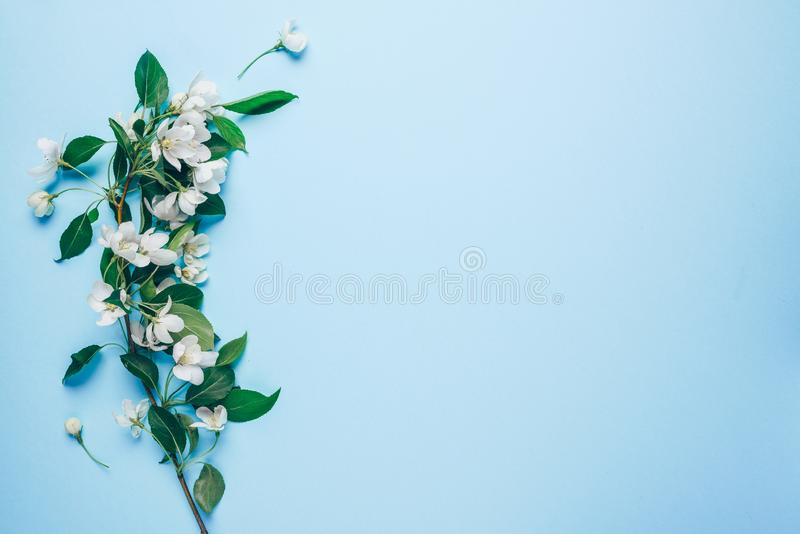 Creative layout with blooming apple tree on a blue background. Flat lay. Concept - spring minimalism.  stock image