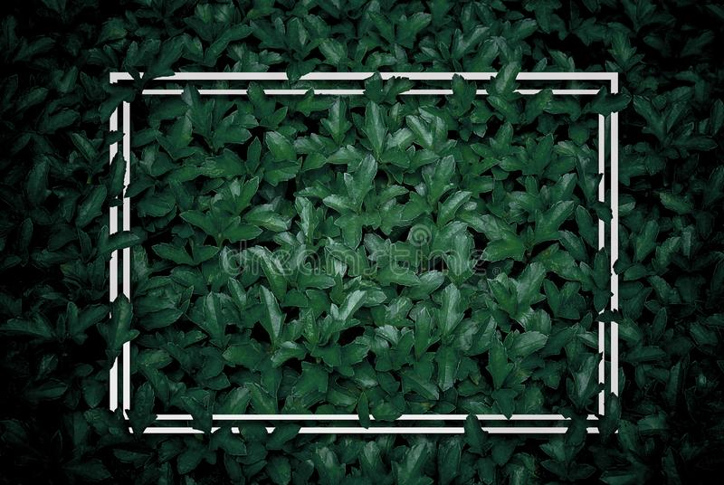 creative layout, green leaves with white square frame, flat lay, for advertising card or invitation stock photography