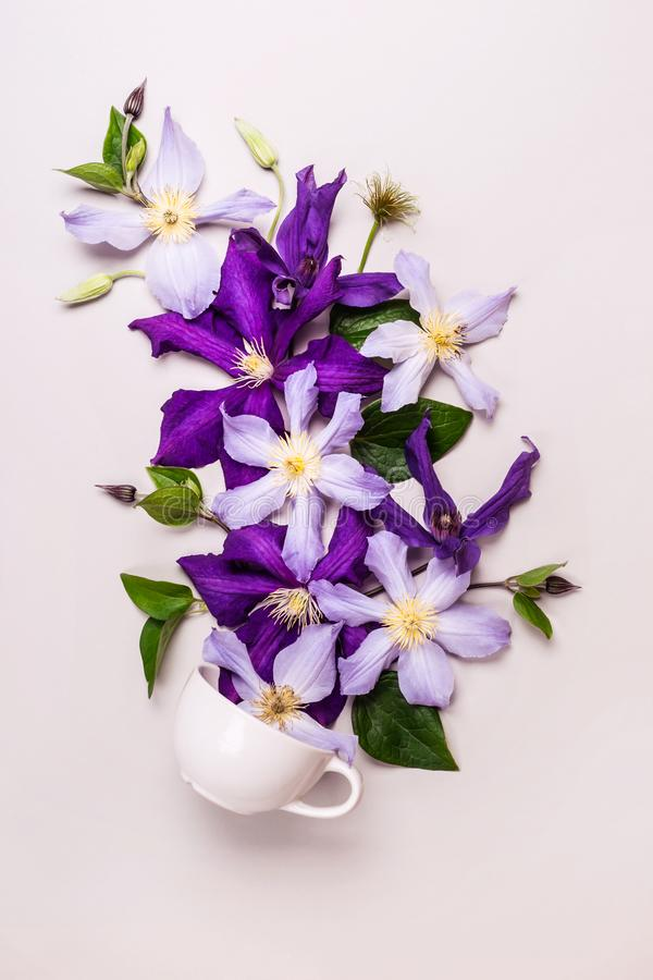 Creative layout made with beautiful flowers. Purple flowers come out of white cup.  royalty free stock images