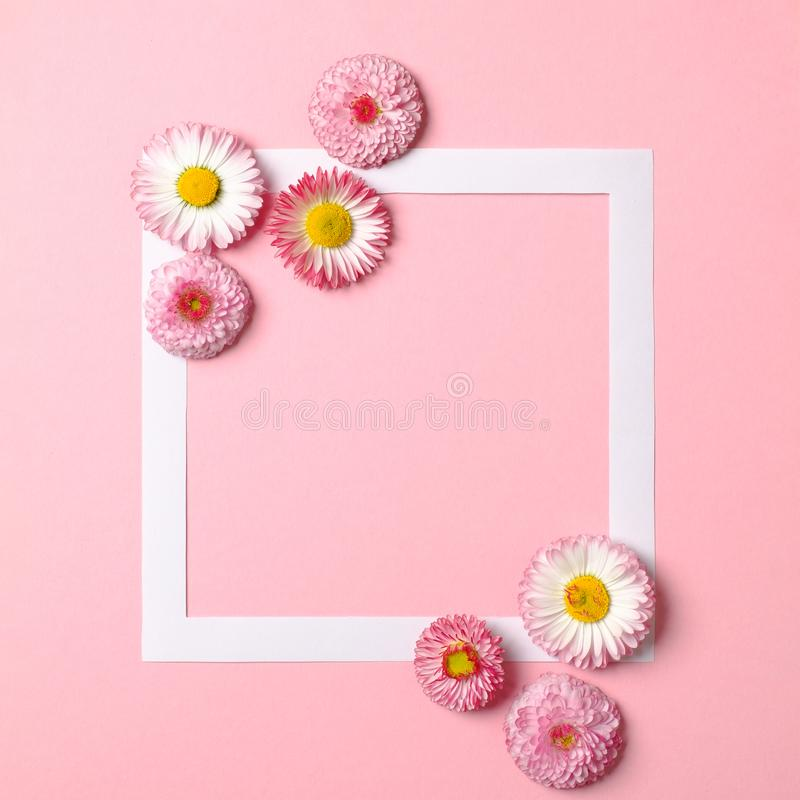 Creative layout made of colorful spring flowers and paper border frame on pastel pink background. Minimal holiday concept. Flat. Lay pattern. Top view, overhead stock photography