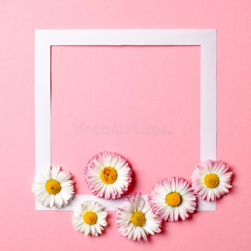 Creative layout made of colorful spring flowers and paper border frame on pastel pink background. Minimal holiday concept. Flat. Lay pattern. Top view, overhead royalty free stock photography