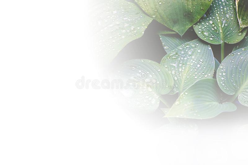 Creative layout made of colorful tropical leaves on white background. Minimal summer exotic concept with copy space. Border stock illustration